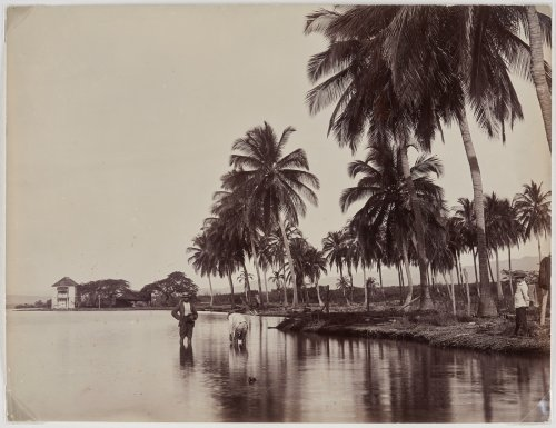 Caribbean Communities in Toronto Helped the Art Gallery of Ontario Acquire a Historic Trove of Photographs From the Islands