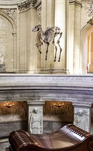 A French Artist Is Under Fire for Hanging a 'Disrespectful' Replica Skeleton of Napoleon's Horse Over the Military Leader's Tomb | Artnet News