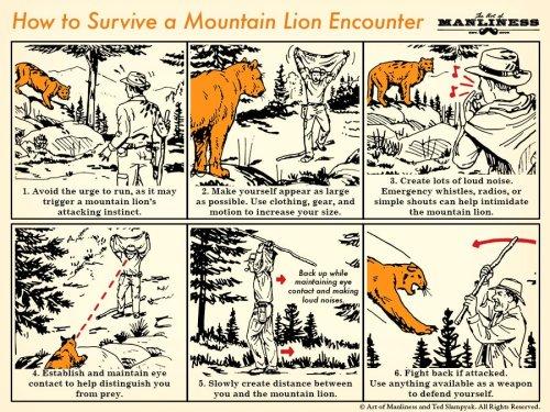 How to Survive a Mountain Lion Encounter