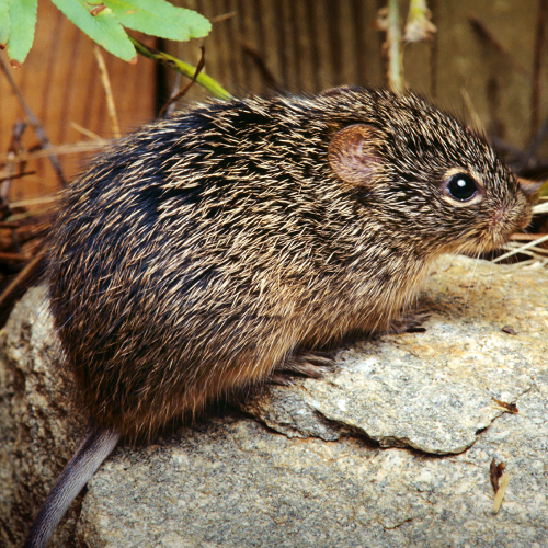 All You Need To Know About Ortho-hantavirus