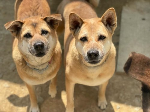 Hong Kong Dog Shelter To Close In Two Months Without Urgent Funding