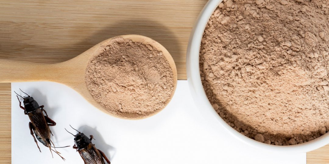 Here's Why Trainers Are Switching to Cricket Protein Powder
