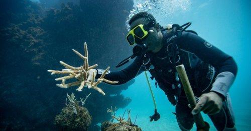 Destination Nature Episode 1: Restoring the Reef