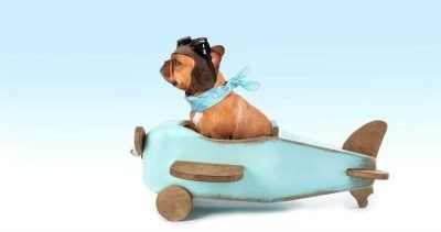 How to Fly With Your Pet