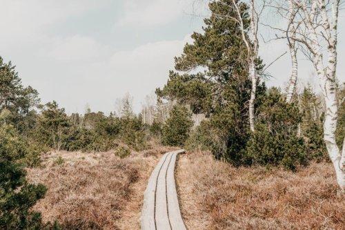 So macht Lernen Spaß: Bei einem Spaziergang im Arrisrieder Moos kannst du noch was lernen!