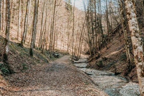 Isny Wandern: Erklimme mit uns die Himmelsleiter im Rohrdorfer Tobel (Heiligenschein inklusive)