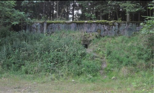The Saga of the Cannibal Ants in a Soviet Nuclear Bunker