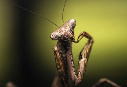 Big Shots, Small Creatures: Macro Photography With Joseph Saunders