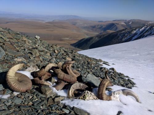 Mongolia's Melting Ice Reveals Fragile Prehistoric Artifacts
