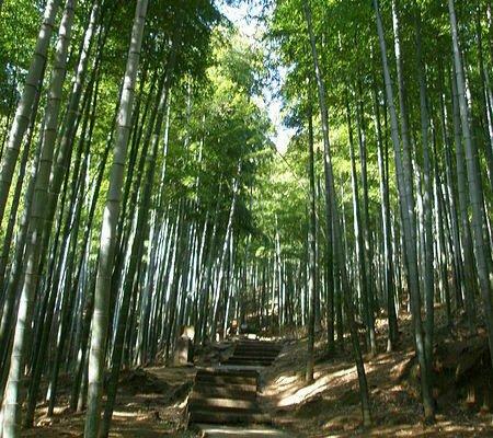 Anji Bamboo Museum