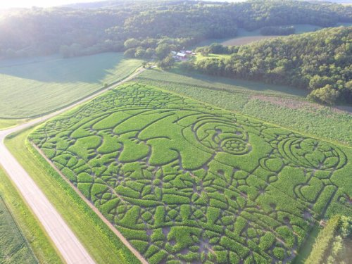 Get Lost in a Corn Maze That Looks Like a Microscopic 'Water Bear'