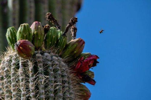 The Ancient Art of Harvesting Fruit in the Desert