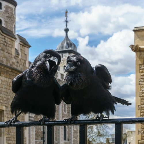 Curious Secrets of the Tower of London cover image