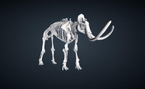 Help Atlas Obscura Find the Smithsonian's Weirdest Items