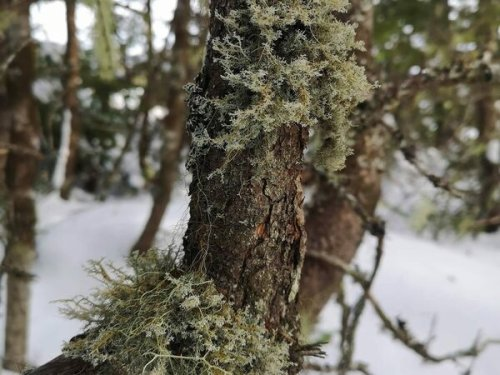 The Hidden World of Lichens With Felicity Roberts