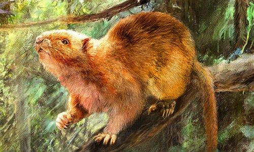 Giant Cloud Rats Hint at a Prehistoric Biodiversity Paradise
