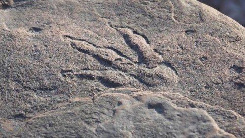 Mexikanische Forschende wollen neue Dinosaurierart entdeckt haben