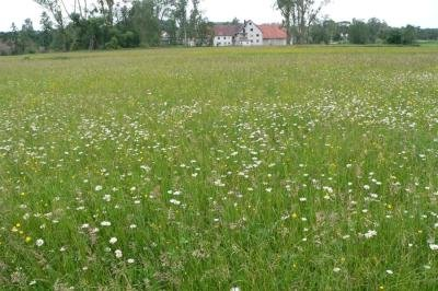 Blühflächen für Insekten: Warum Diedorf weniger mäht