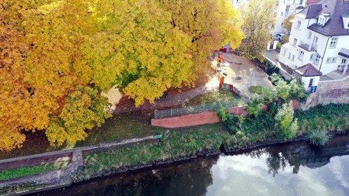 Grüne wollen alte Bäume in Neu-Ulm per Satzung schützen