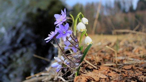 Frühlingsblumen und Bäume, die du kennen solltest!