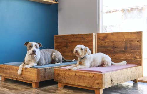 9 Eco-Friendly & Sustainable Products Your Pet Will Love | Avocado Magazine