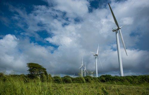 The Businesses Championing Climate Change Legislation   Avocado Magazine