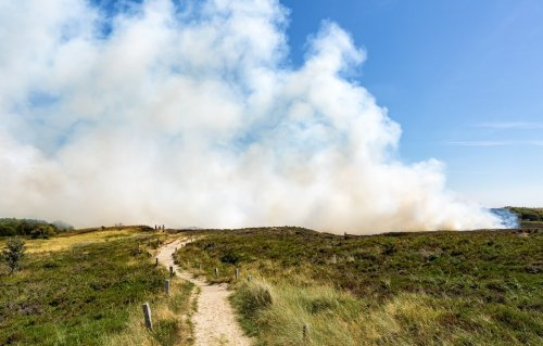 Why Prescribed Burns Are Essential For Forest Health   Avocado Magazine
