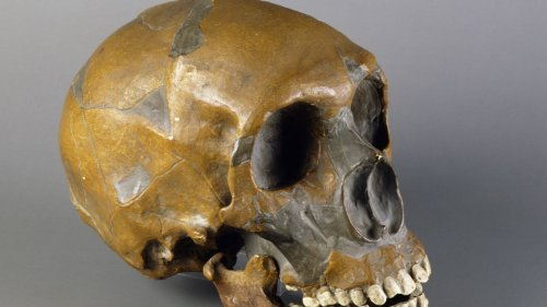 """Discovery of """"Dragon Man"""" skull challenges theories of human evolution"""