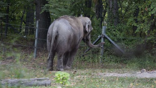 Happy the elephant gets her day in court