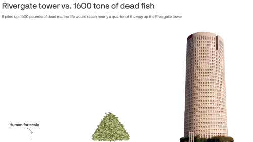 One way to visualize Tampa Bay's 1,624 tons of dead fish