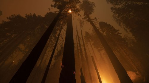 Air quality alerts issued as California fires threaten more sequoias