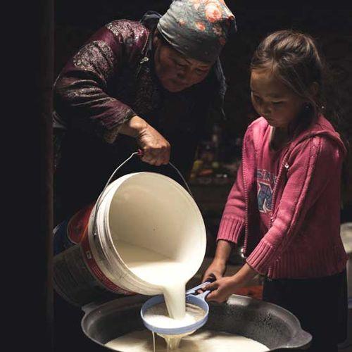 A Natural Versatility: Mongolian Yogurt Culture   FERMENTATION
