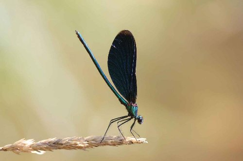 Dragonfly species losses and gains in Germany