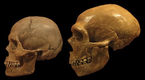 Genetic research reveals Neanderthals could tolerate smoke