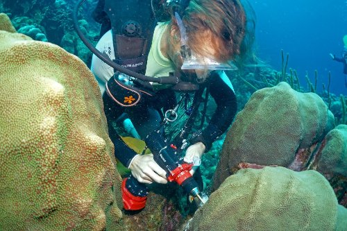 3D imaging creates molecular maps of hidden microbial communities on coral reefs