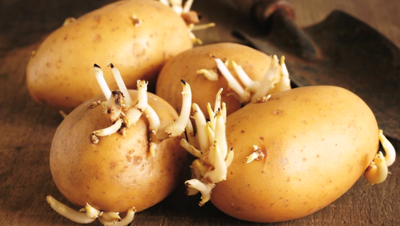 Is It Safe To Eat Sprouted Potatoes?