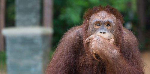 Why animals recognise numbers but only humans can do math