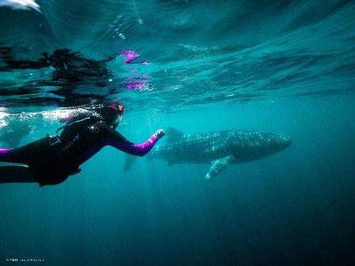 Small genetic clues to track the ocean's elusive gentle giants