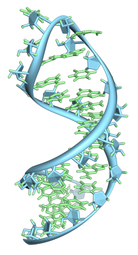 Double-strand RNA exhibits traits different from single-stranded RNA