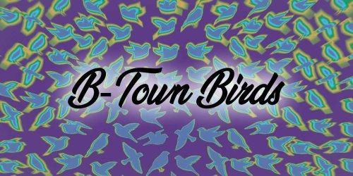 B-Town Birds: Meet the Bushtit