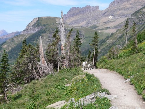 Backpacker's All-Time Favorite Hikes in Glacier National Park