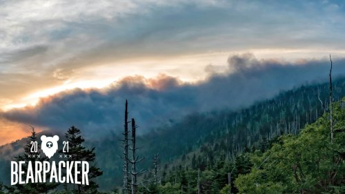 A Bear Lover's Guide to Great Smoky Mountains National Park