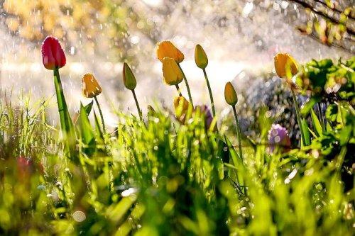 Ideen fürs Gärtnern – auch für Kinder