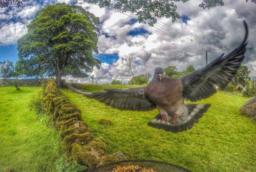 Gardencam Highlights – A Summer in Cumbria | BaldHiker