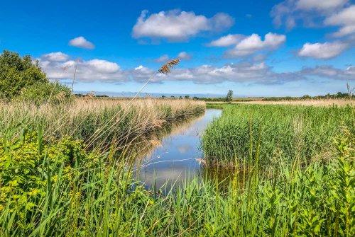 A Walk Around Stodmarsh National Nature Reserve