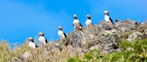 Puffins and The Pembrokeshire Coast | BaldHiker