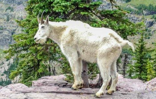 Sperry Chalet Trail, Glacier National Park, Montana | BaldHiker