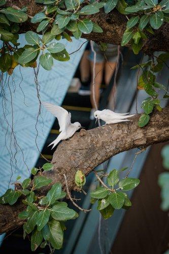 The Bird of Kū