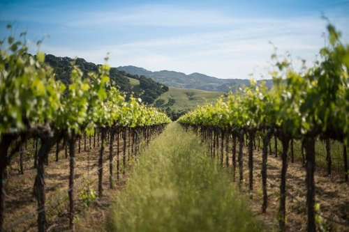 These 2 Wine Stocks Are Now Coming of Age