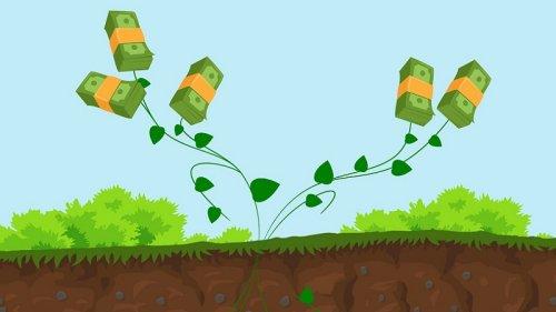 Nachhaltig investieren: 3 Regeln, die Greenwashing verhindern sollen